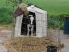 melkveehouderij-de-jong-43