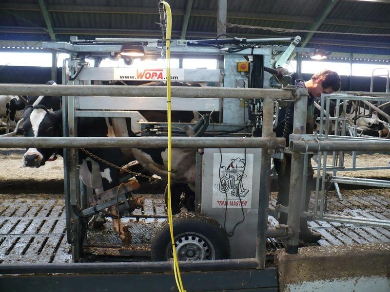 melkveehouderij-de-jong-2