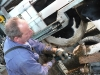 melkveehouderij-de-jong-7