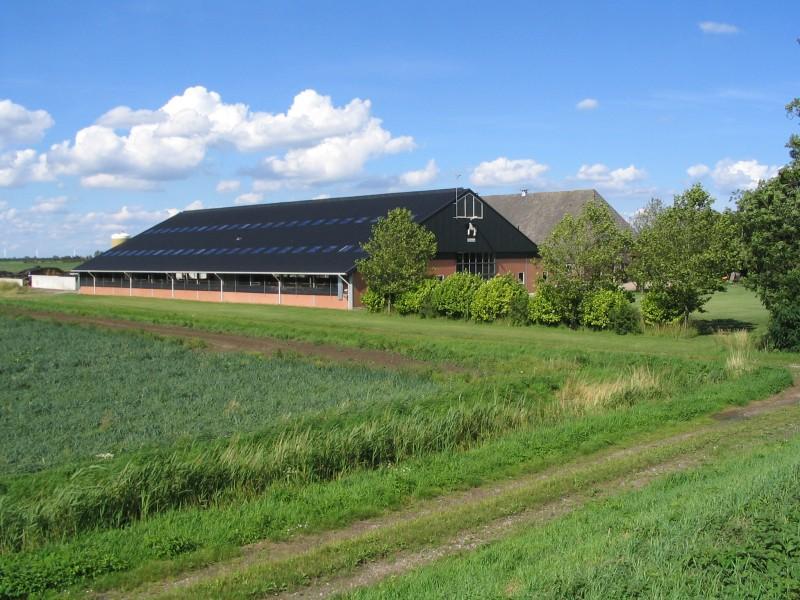 melkveehouderij-de-jong-18