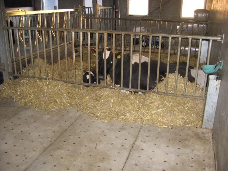 melkveehouderij-de-jong-11