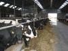 melkveehouderij-de-jong-45