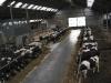 melkveehouderij-de-jong-47