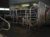 melkveehouderij-de-jong-40