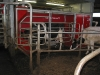 melkveehouderij-de-jong-41