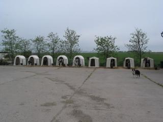 melkveehouderij-de-jong-42