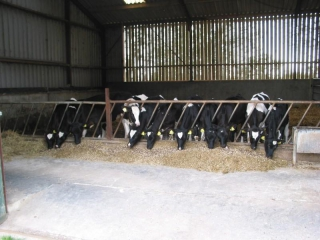 melkveehouderij-de-jong-44