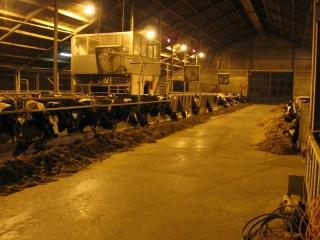 melkveehouderij-de-jong-3